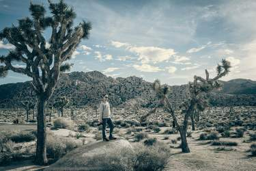 FEB 2017: Joshua Tree, Joshua-Tree-Nationalpark, Kalifornien