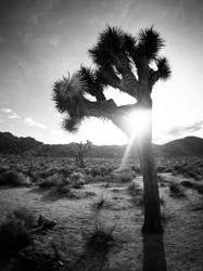 FEB 2017: Joshua Tree, Joshua-Tree-Nationalpark